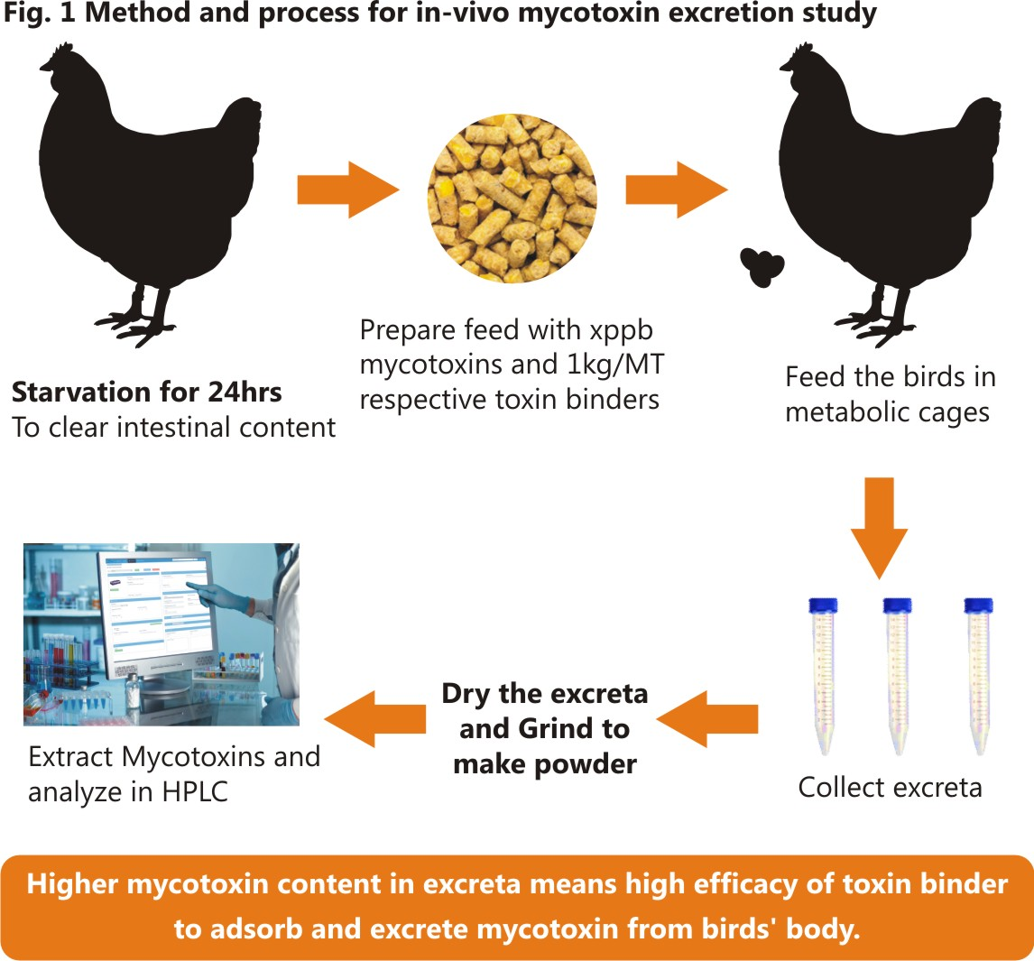 An Innovative Way to Evaluate Efficacy of Mycotoxin Binders