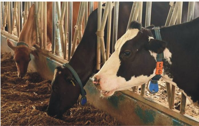 Organic_Minerals_In_Dairying